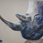 rhino oil pastels drawing